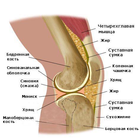 Dolor en la rodilla ayuda. La aparición de dolor en la articulación ...