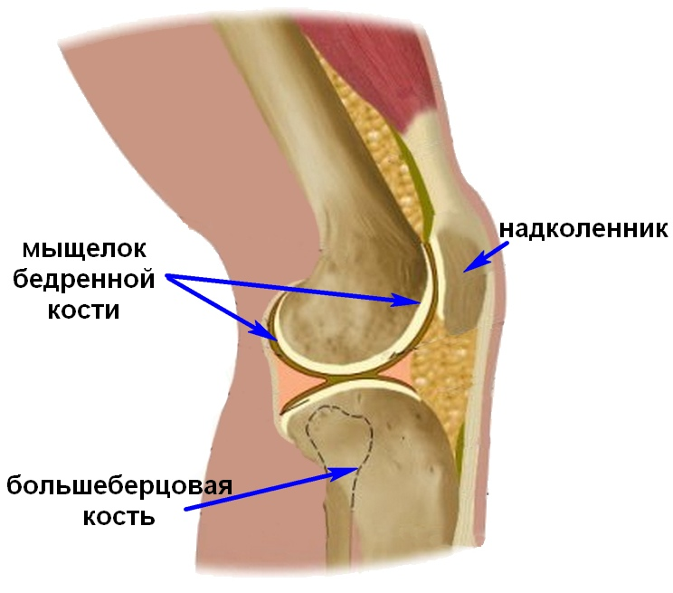 Восстановление подвижности коленного сустава после перелома мыщелка большой берцовой кост суставы амн