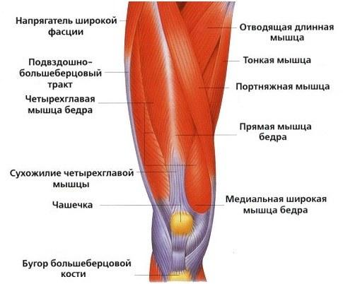 лечение при вывихе тазобедренного сустава