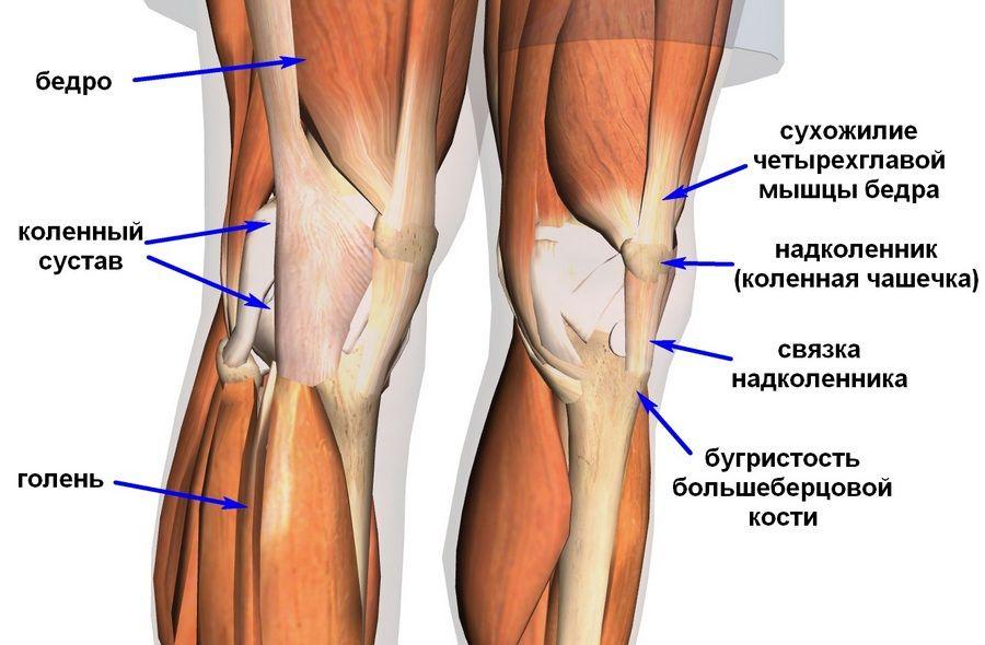 Dolor en la rodilla izquierda desde el interior. La estructura y ...