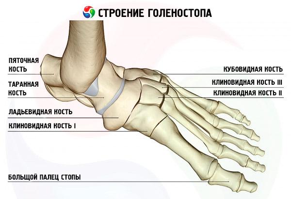 Опух сустав около пятки после физических нагрузок гимнастика для суставов и позвоночника по норбекову скачать бесплатно