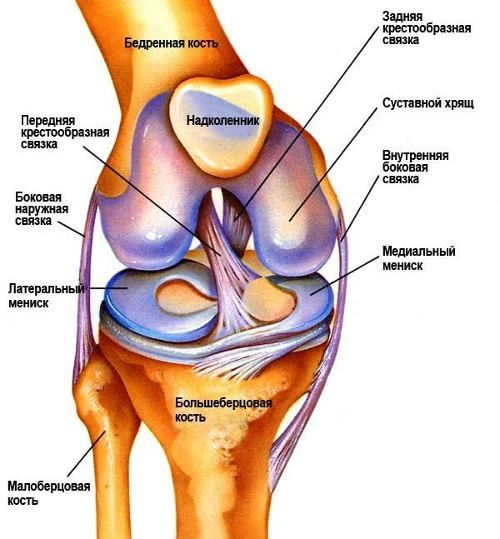 Внезапная острая боль в коленном суставе боль в суставах и костях причина